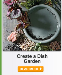 Create a Dish Garden - READ MORE