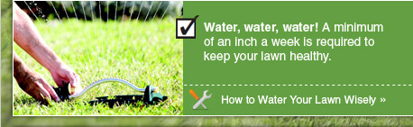Water, water, water! A minimum of an inch a week is required to keep your lawn healthy. - Project: How to Water Your Lawn Wisely