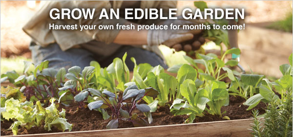GROW AN EDIBLE GARDEN - Harvest your own fresh produce for months to come!