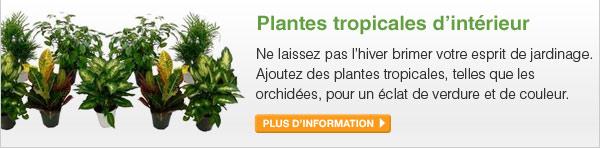 Plantes tropicales d'intérieur - Ne laissez pas l'hiver brimer votre esprit de jardinage. Ajoutez des plantes tropicales, telles que les orchidées, pour un éclat de verdure et de couleur. - PLUS D'INFORMATION