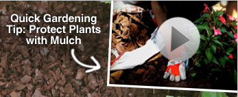 Video: Protect Plants With Mulch