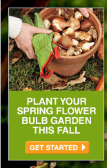 Plant Your Spring Flower Bulb Garden This Fall - GET STARTED