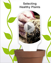 Video: Selecting Healthy Plants