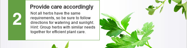2. Provide care accordingly - Not all herbs have the same requirements, so be sure to follow directions for watering and sunlight. Hint: Group herbs with similar needs together for efficient plant care.