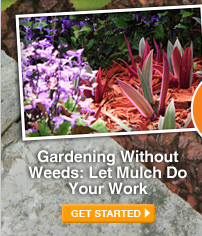 Gardening Without Weeds: Let Mulch Do Your Work - GET STARTED