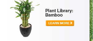 Plant Library: Bamboo - LEARN MORE