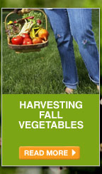 Harvesting Fall Vegetables - READ MORE