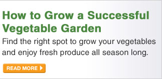 How to Grow a Successful Vegetable Garden - READ MORE