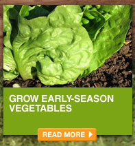 Grow Early-Season Vegetables - READ MORE