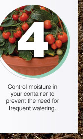 Control moisture in your container to prevent the need for frequent watering.