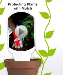 Video: Protecting Plants with Mulch
