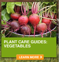 Plant Care Guides: Vegetables - LEARN MORE