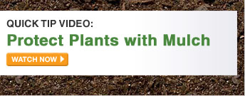 Quick Tip Video: Protect Plants With Mulch - WATCH NOW