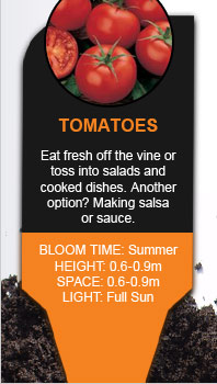 Plant Library: Tomatoes