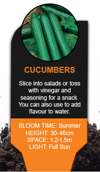 Plant Library: Cucumbers