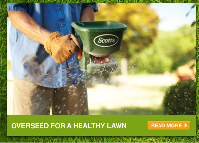 Overseed for a Healthy Lawn - READ MORE