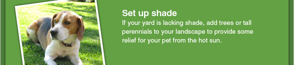 Set up shade - If your yard is lacking shade, add trees or tall perennials to your landscape to provide some relief for your pet from the hot sun.