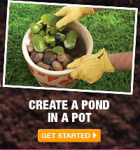 Create a Pond in a Pot - GET STARTED