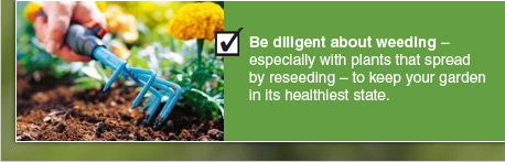 Be diligent about weeding – especially with plants that spread by reseeding – to keep your garden in its healthiest state.