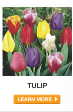 Plant Care Guide: Tulip - LEARN MORE